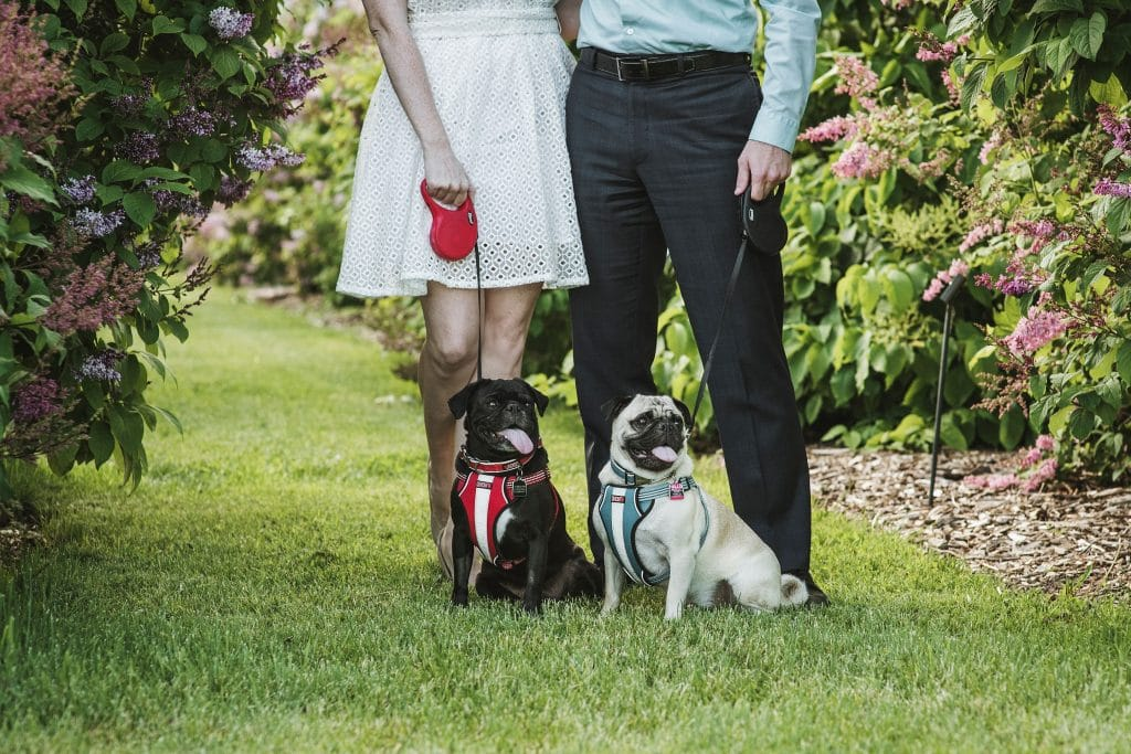 Ottawa Experimental Farm Engagement with Pugs